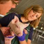 Top 6 Swine Product Frequently Asked Questions Answered